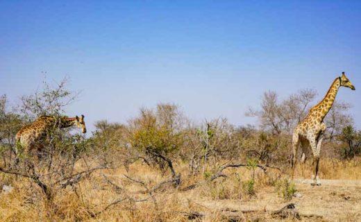 Diario di viaggio in Sudafrica